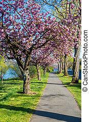Blossoms Along Lake Washington 4