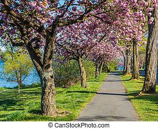 Blossoms Along Lake Washington 5