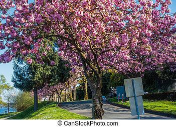 Blossoms Along Lake Washington