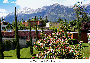 Blossoms and snow capped mountains
