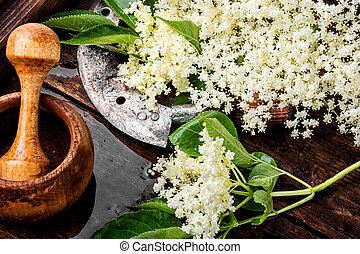 Blossoms of the elderberry