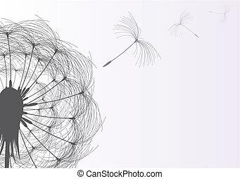 Blow Dandelion On Gray Background