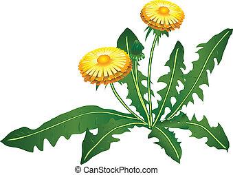 Blowball - Dandelion flower on a green background. Vector...