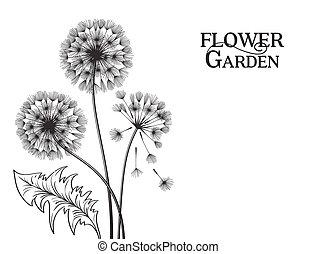 blowball, flower.