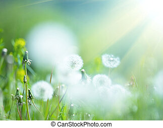 Blowball - meadow