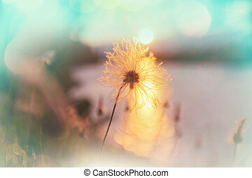 Blowball - Spring sunny meadow