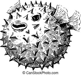 Blowfish, vector illustration, sketch. EPS 10, AI, JPEG
