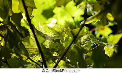 Blown by Wind Back Lit Leaves in Night - Blown by wind back...