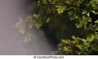 Blown by Wind Maple Tree Night Scene Flares - Blown by wind...