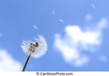 Blown dandelion on a blue sky.