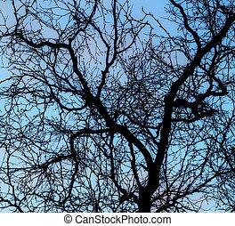 blu, albero, cielo, silhouette, betulla