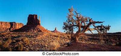 blu, arizona, vecchio albero, cielo, valle monumento, alba