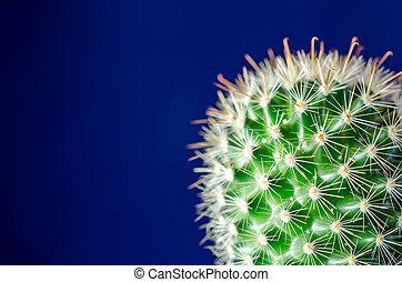 blu, cactus, fondo