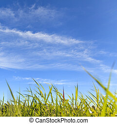 blu, campagna, erba, cielo