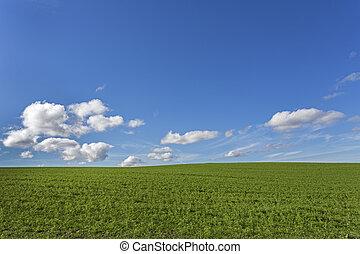 blu, campo, cielo, verde, nuvoloso