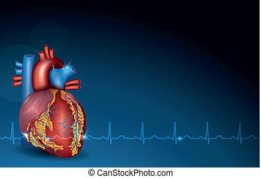 blu, cuore, umano, fondo