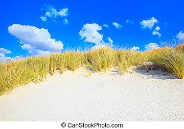 blu, dune, cielo, sabbia, bianco, erba, spiaggia
