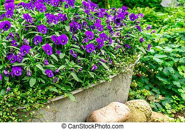 blu, estate, giardino, sole, depressione, fiori, zink