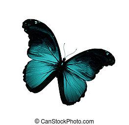 blu, farfalla, grunge, volare, isolato, bianco