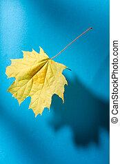 blu, foglia, isolato, fondo