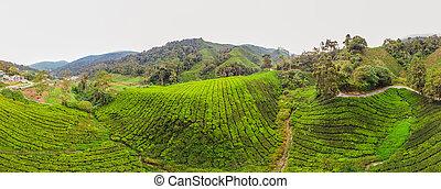 blu, formato, tè, natura, cielo, strabiliante, lungo, piantagione, time., alba, fondo, paesaggio, bandiera, tramonto, nebbioso, vista