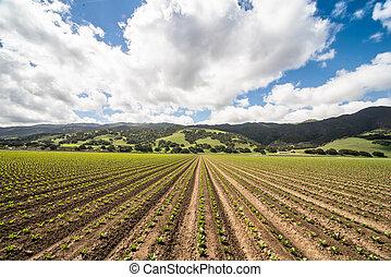 blu, lattuga, cielo grande, campo, sotto