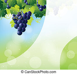 blu, mazzo, uve bianche, vino