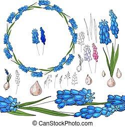 blu, muscari, set, white.