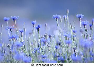 blu, nota