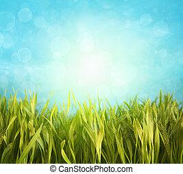 blu, primavera, erba, cielo, fresco