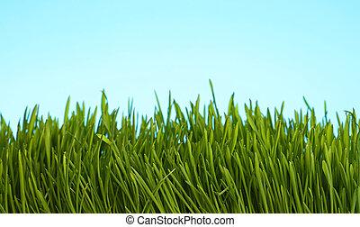 blu, primavera, sopra, cielo, fine, fresco, erba