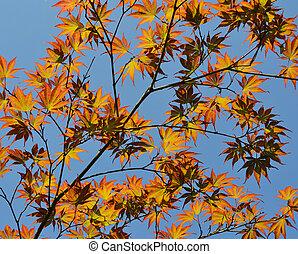 blu, rami, sopra, cielo, autunno, backg