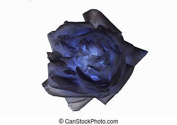 blu, rosa, astratto