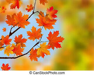 blu, sky., foglie, albero, contro, acero, rosso