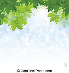 blu, sky., foglie, lussureggiante, contro, verde, acero