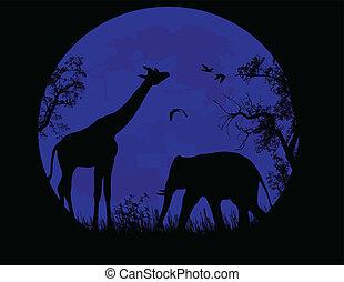 blu, sopra, giraffa, tramonto, elefante, selvatico
