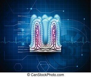 blu, tecnologia, intestinale, fondo, villi