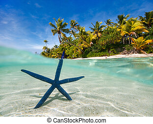 blu, tropicale, spiaggia,  starfish
