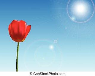 blu, tulipano, cielo, sfondo rosso
