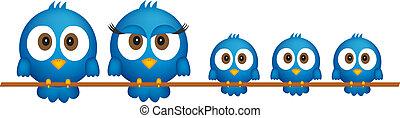 blu, uccelli, famiglia