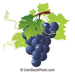 blu, uve vino, mazzo, verde