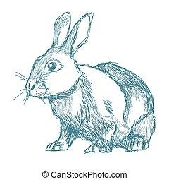 blu, vendemmia, schizzo, coniglio