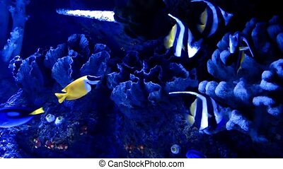Fishes in Aquarium - Blue Adventure Fishes in Aquarium