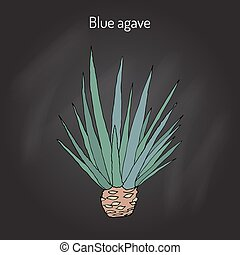 Blue agave Agave tequilana . Hand drawn botanical vector ...