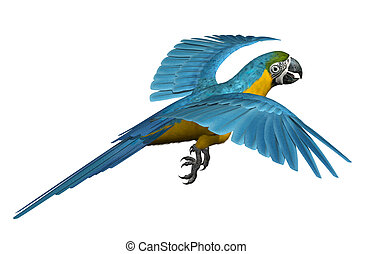 Blue and Gold Macaw Flying - 3D render