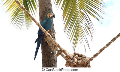 Blue and Gold Macaw on Rope