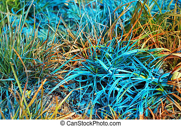 blue and orange grass