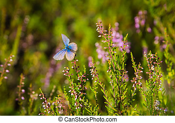 Blue and purple butterfly is sitting on a flower in a forest