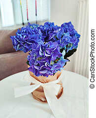 Blue and violet hydrangea packed as gift with white bow