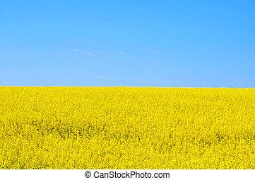 Blue and yellow field. Ukraine